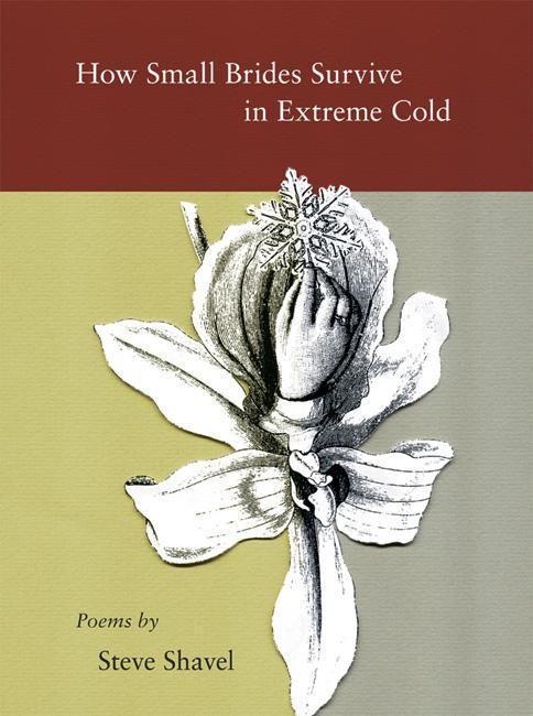How Small Brides Survive in Extreme Cold als Taschenbuch