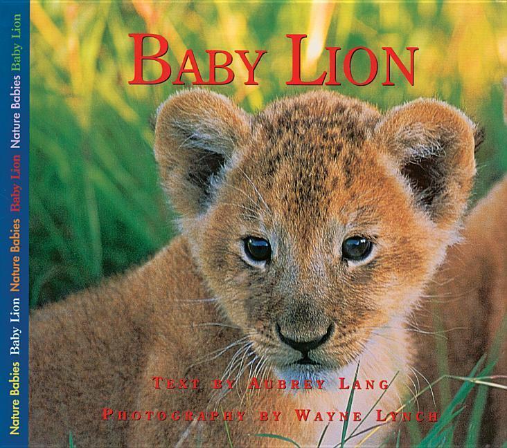 Baby Lion als Taschenbuch