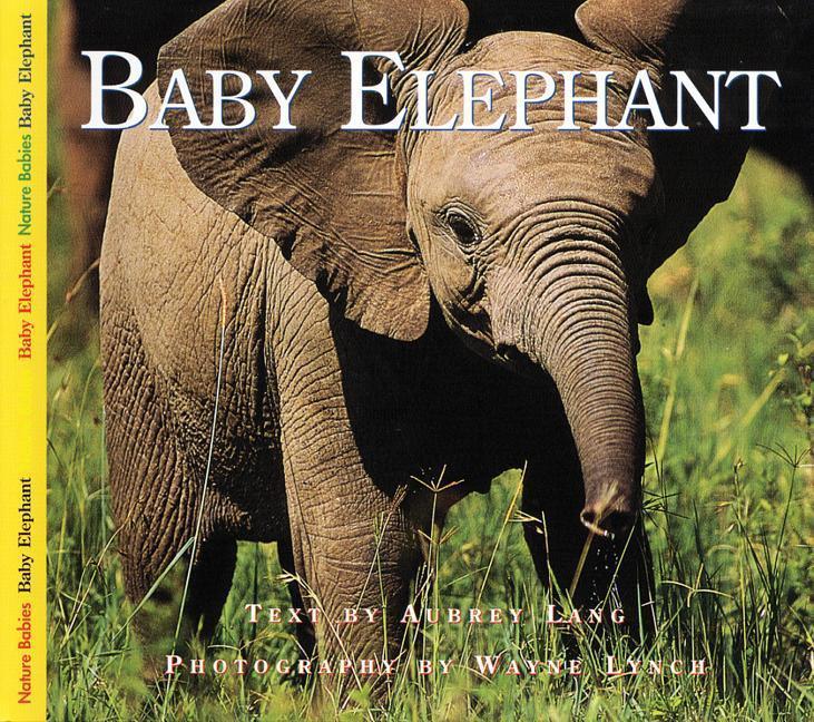Baby Elephant als Taschenbuch