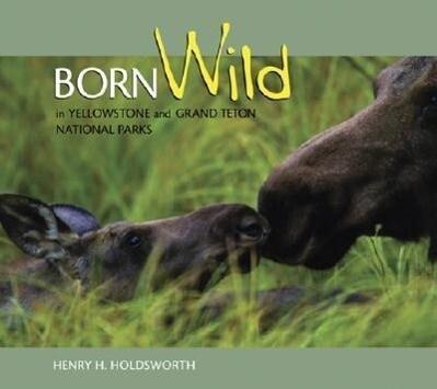 Born Wild in Yellowstone and Grand Teton National Parks als Taschenbuch