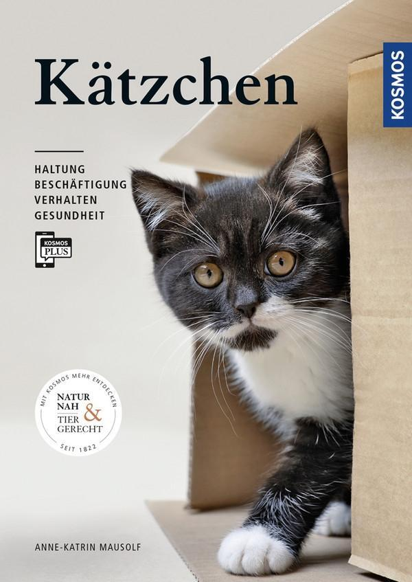 Kätzchen als Buch (gebunden)