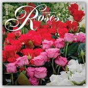 Roses - Rosen 2017 - 18-Monatskalender