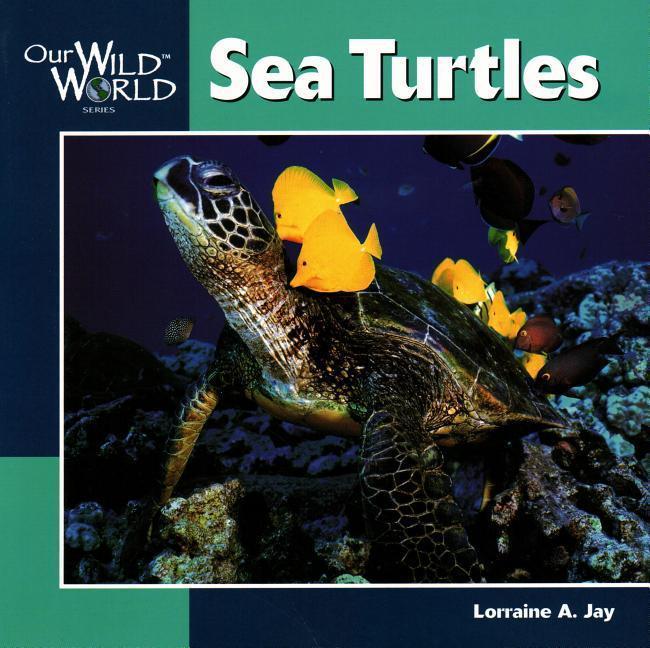 Sea Turtles als Taschenbuch