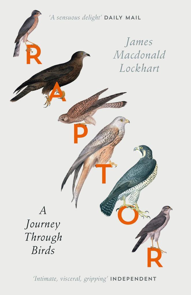 Raptor als Taschenbuch von James Macdonald Lock...
