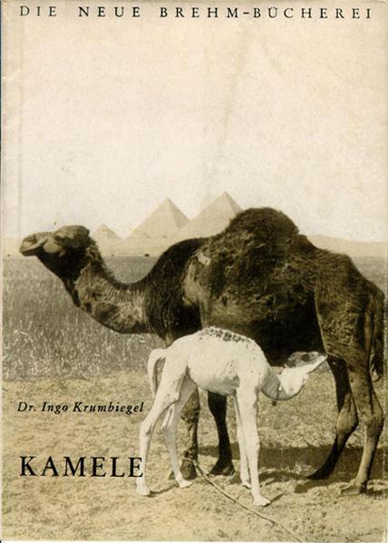 Kamele als Buch