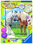 Glückliche Pferde. Malen nach Zahlen Serie D Pferde