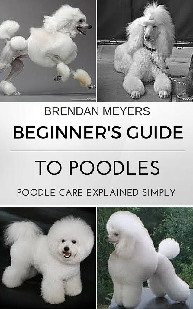 Beginner´s Guide To Poodles - Poodle Care Expla...