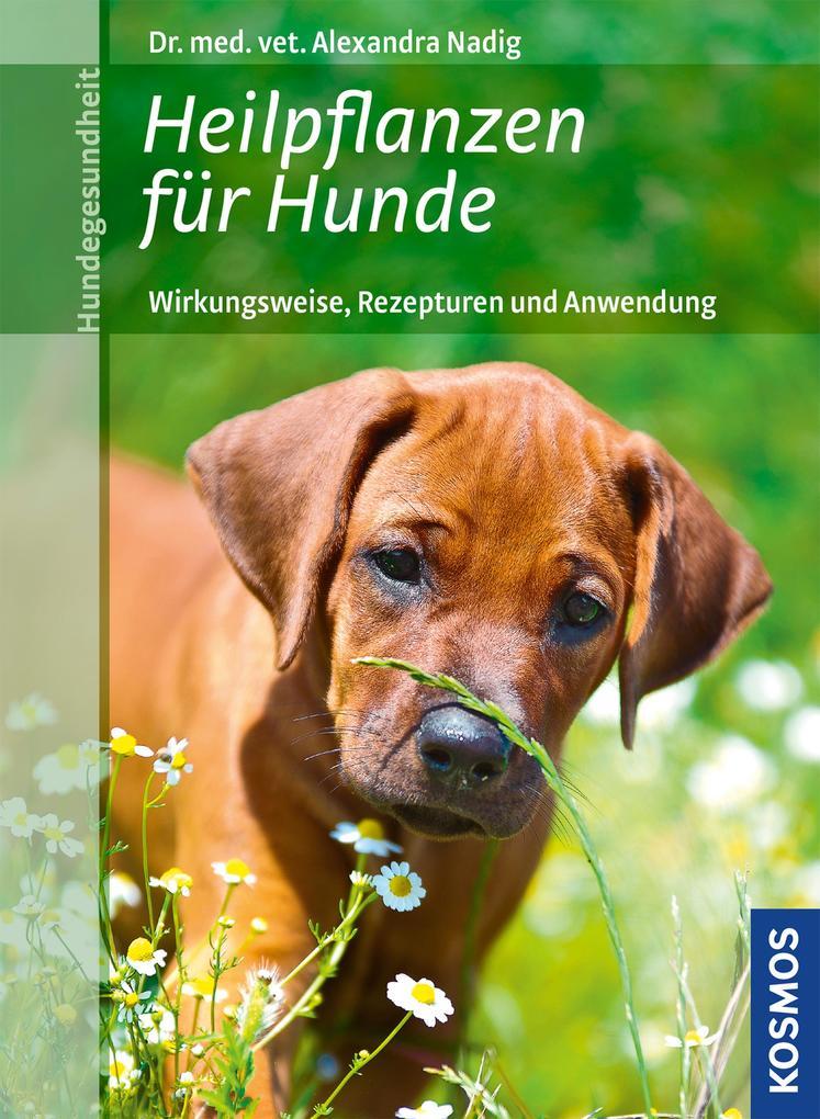 Heilpflanzen für Hunde als eBook Download von A...