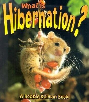 What is Hibernation? als Taschenbuch