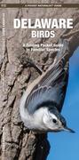 Delaware Birds: A Folding Pocket Guide to Familiar Species