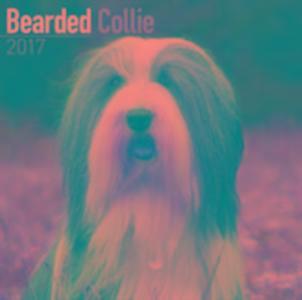 Bearded Collie Calendar 2017 als Kalender