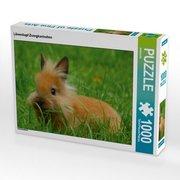 Löwenkopf Zwergkaninchen (Puzzle)