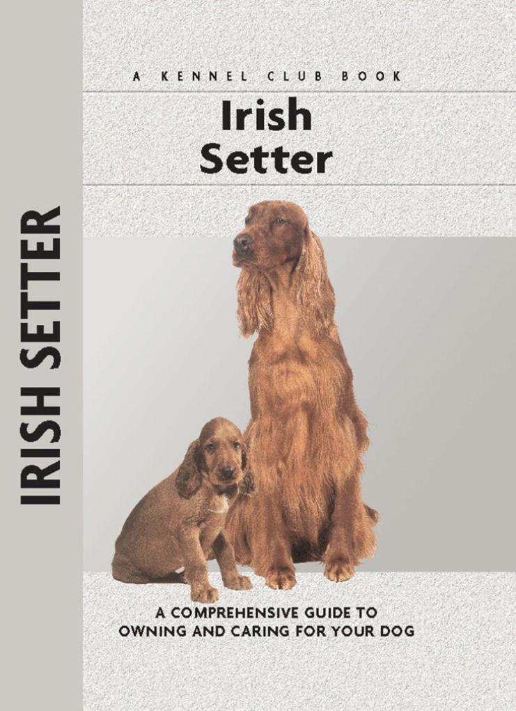 Irish Setter als Buch