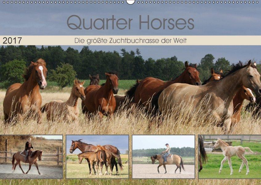 Quarter Horses - Die größte Zuchtbuchrasse der ...