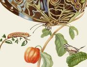 Maria Sibylla Merians Schmetterlinge - Gästebuch