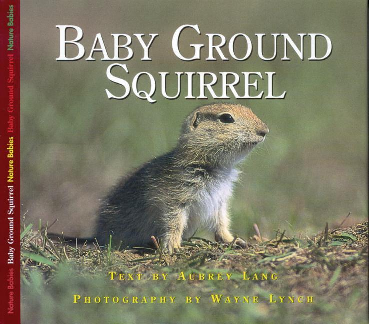 Baby Ground Squirrel als Buch