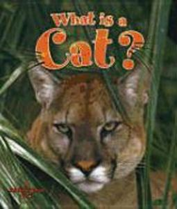 What Is a Cat? als Buch
