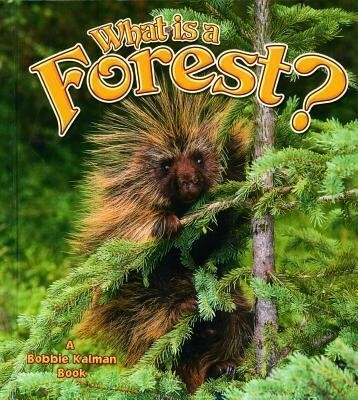 What Is a Forest? als Buch