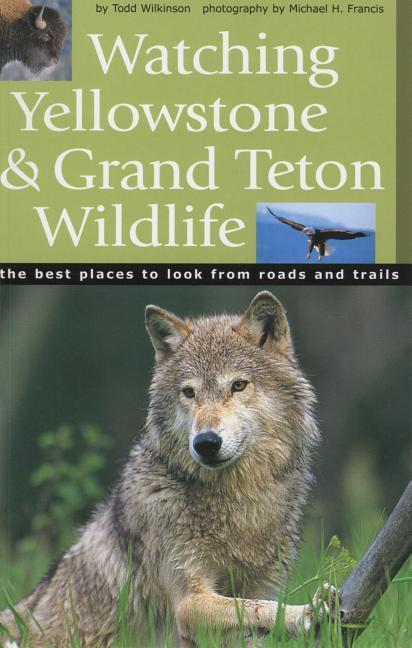 Watching Yellowstone & Grand Teton Wildlife als Taschenbuch