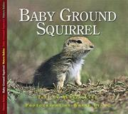 Baby Ground Squirrel