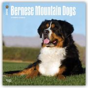 Bernese Mountain Dogs 2018 Wall Calendar
