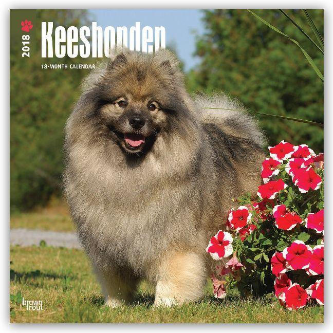 Keeshonden - Wolfsspitze 2018 - 18-Monatskalender