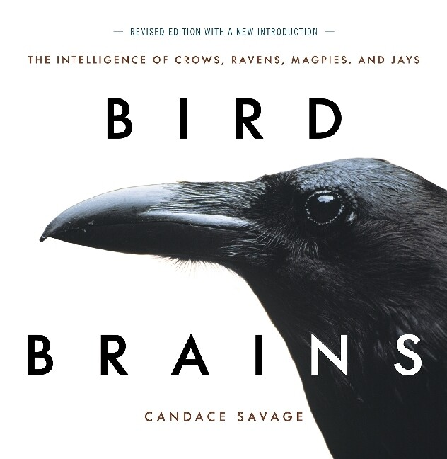 Bird Brains, New Edition: The Intelligence of Crows, Ravens, Magpies, and Jays als Taschenbuch