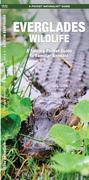 Everglades Wildlife: A Folding Pocket Guide to Familiar Animals