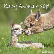 Baby Animals 30 x 30 Grid Calendar 2018