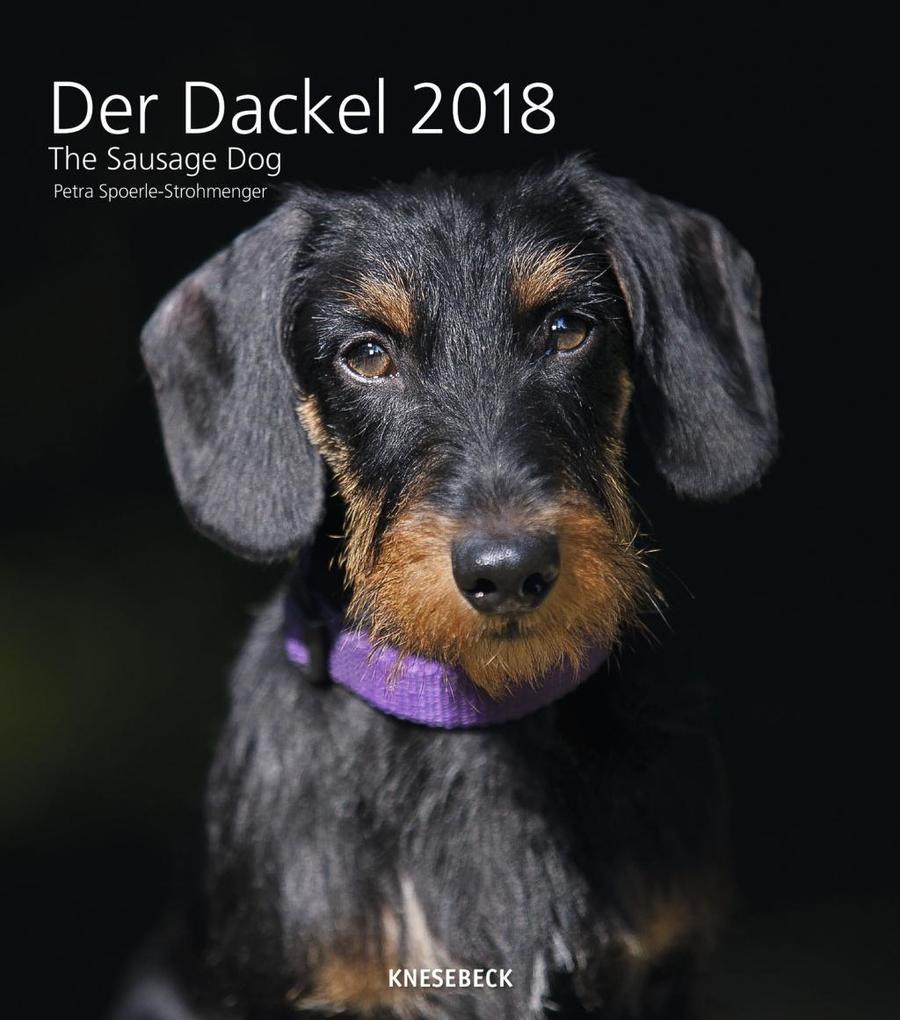 Sausage Dog 30 x 34 Wall Calendar 2018 als Kalender