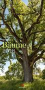 Bäume 2018