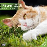 Katzen 2018 Art12 Collection