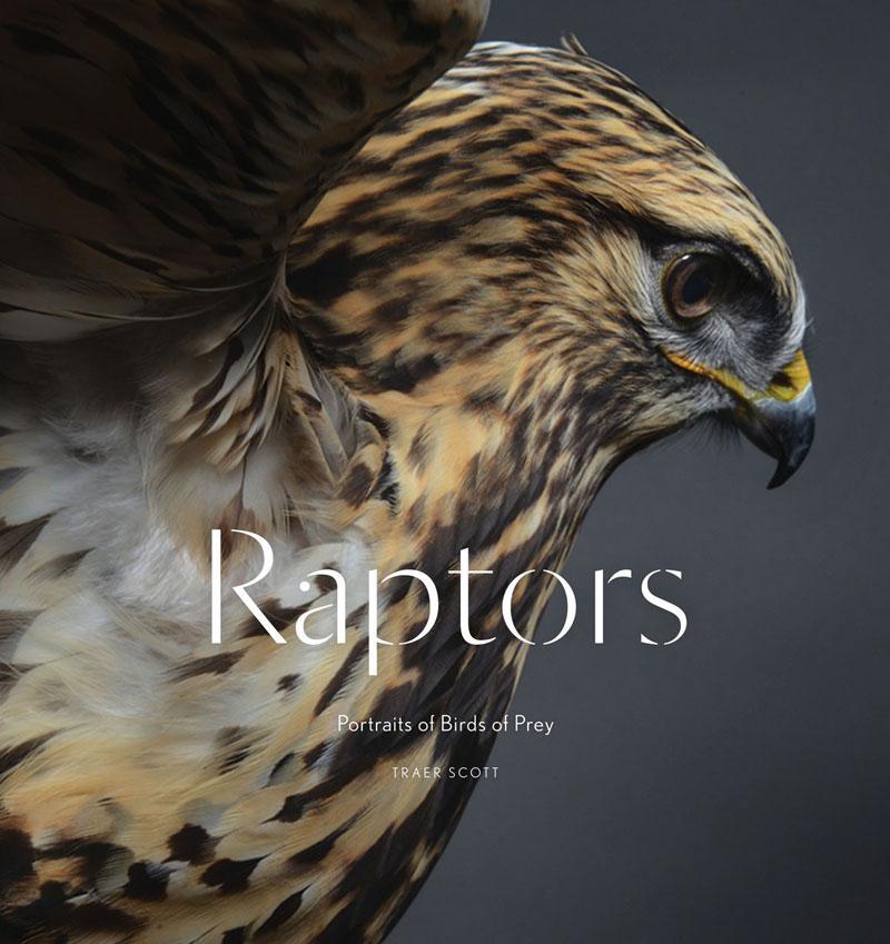Raptors als Buch von Traer Scott