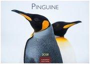 Pinguine 2018 - Format S