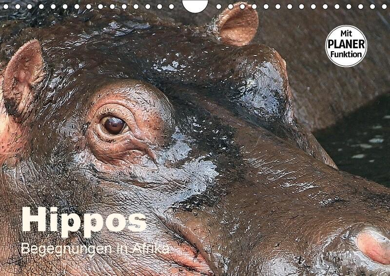 Hippos - Begegnungen in Afrika (Wandkalender 20...