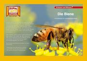 Kamishibai: Die Biene