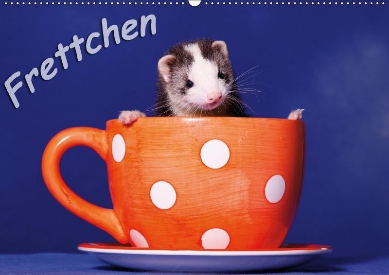 Frettchen - Ferrets (Wandkalender 2018 DIN A2 q...