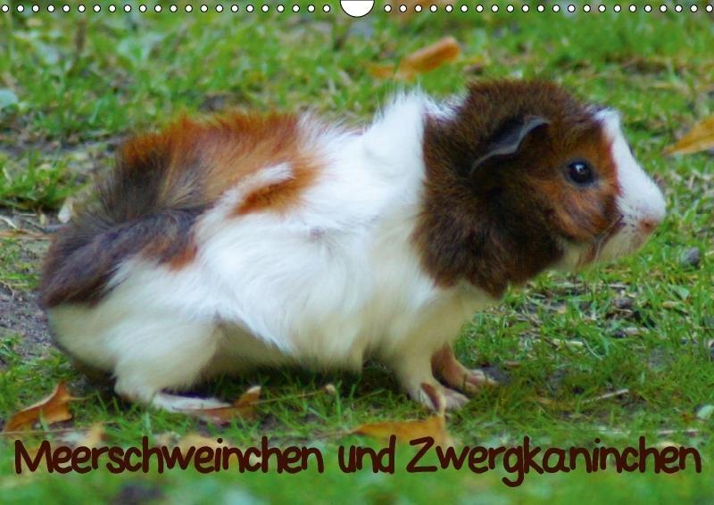 Meerschweinchen und Zwergkaninchen (Wandkalende...