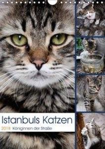 Istanbuls Katzen (Wandkalender 2018 DIN A4 hoch)