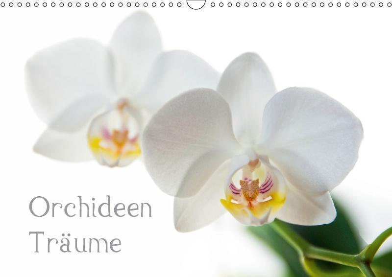 Orchideen Träume (Wandkalender 2018 DIN A3 quer)