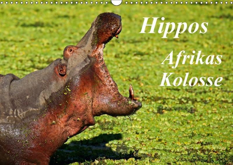 Hippos - Afrikas Kolosse (Wandkalender 2018 DIN...