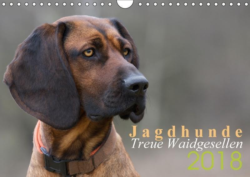Jagdhunde - Treue Waidgesellen (Wandkalender 20...