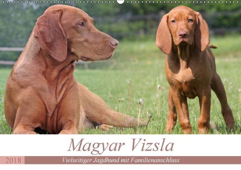 Magyar Vizsla - Vielseitiger Jagdhund mit Famil...