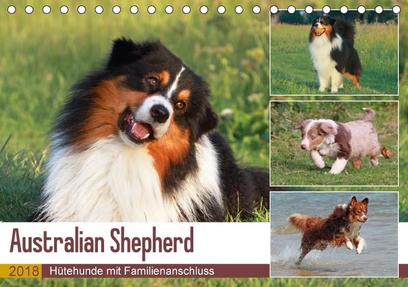 Australian Shepherd - Hütehunde mit Familienans...