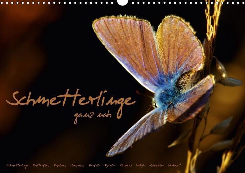 Schmetterlinge ganz nah (Wandkalender 2018 DIN ...