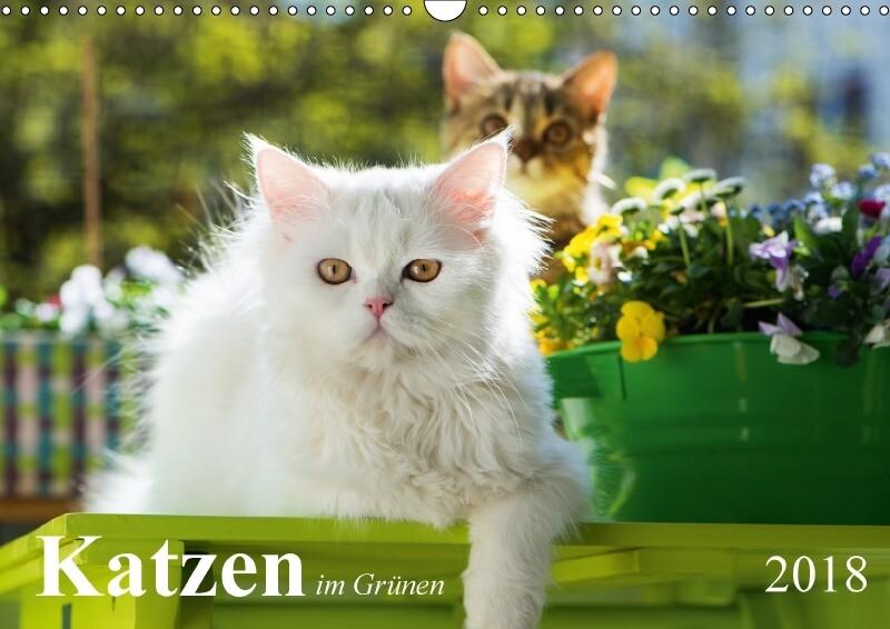 Katzen im Grünen (Wandkalender 2018 DIN A3 quer)