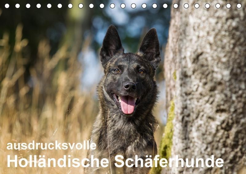 ausdrucksvolle Holländische Schäferhunde (Tisch...