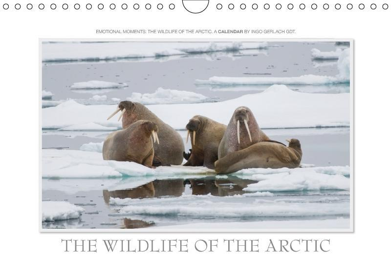 Emotional Moments: The wildlife of the Arctic. ...