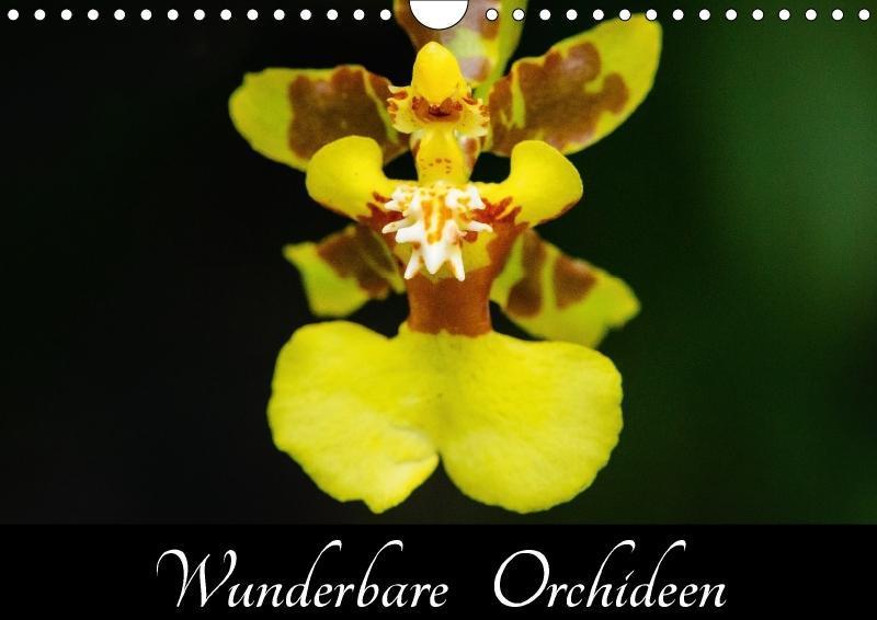 Wunderbare Orchideen (Wandkalender 2018 DIN A4 ...