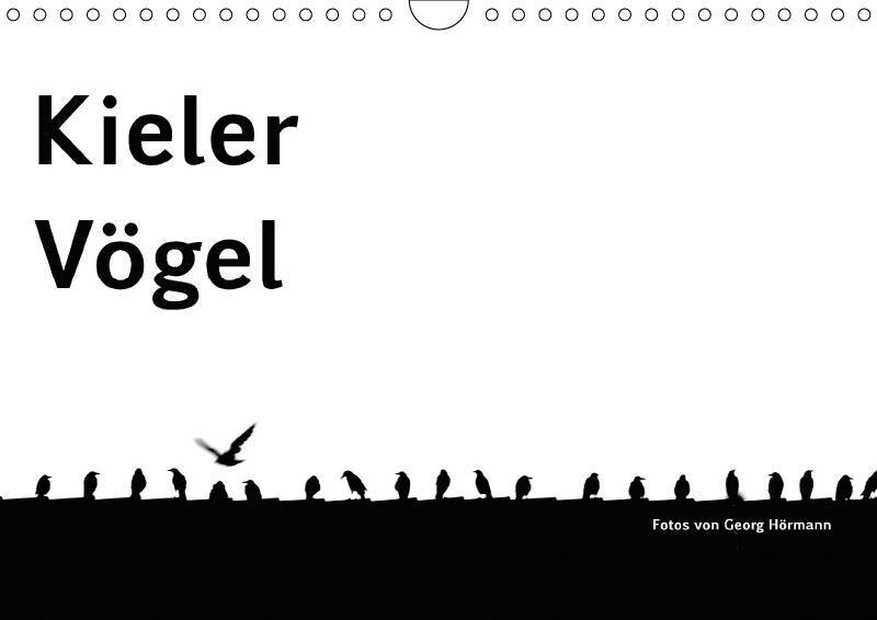 Kieler Vögel (Wandkalender 2018 DIN A4 quer)